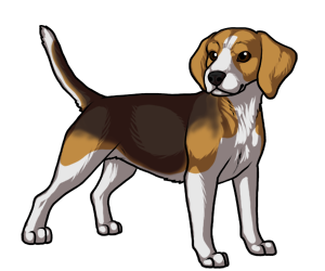 clipart black and white download Collection of free Beagle drawing