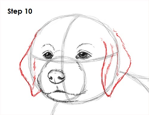 png free library How to Draw a Puppy VIDEO