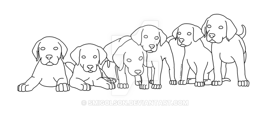 image transparent Labrador Puppies Lineart by Smigolson on DeviantArt
