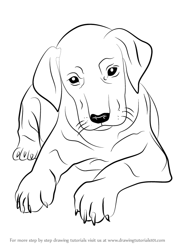 vector free library Learn How to Draw Doberman Puppy