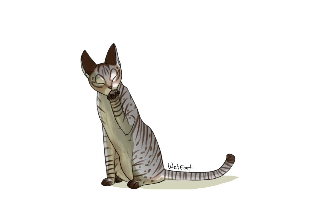 clipart royalty free download Daily random warrior cats. Drawing randomizer cat
