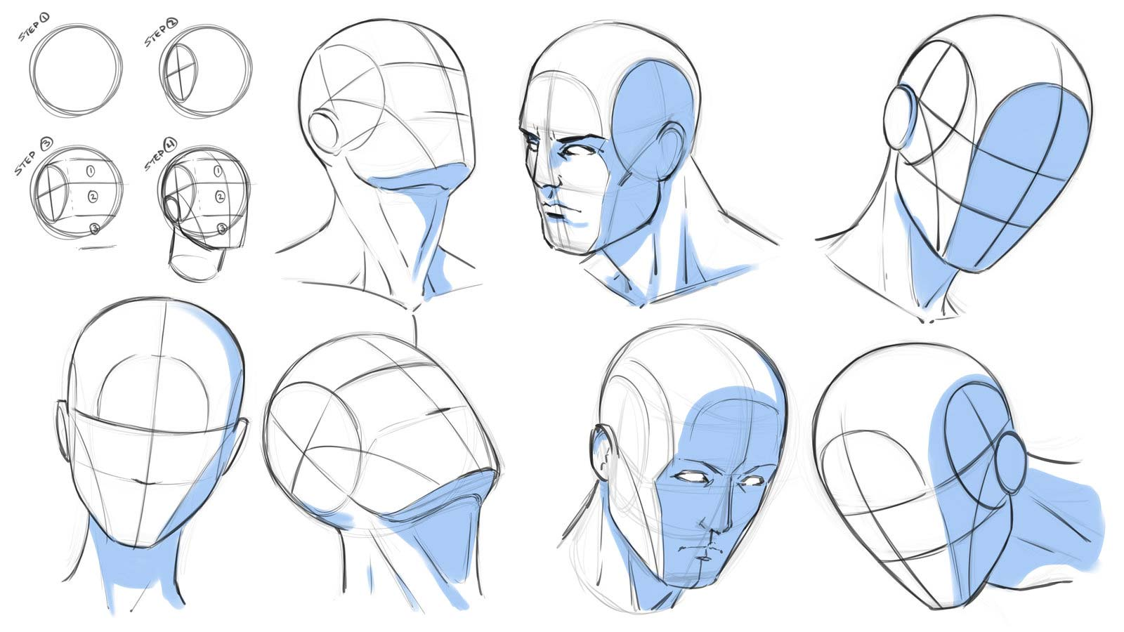 svg freeuse References drawing. Head reference and sketches