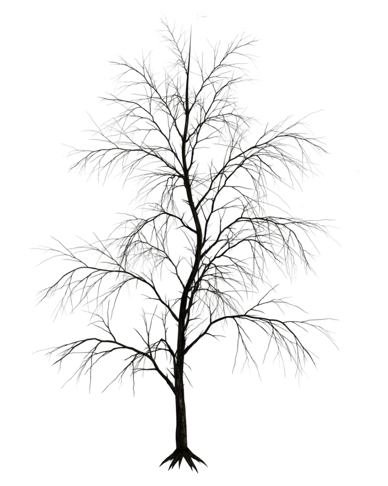 clip art royalty free download Dark trees png stock. Drawing reflections tree