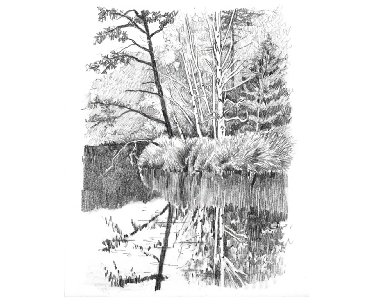svg free download Drawing reflections tree.  ways to spruce