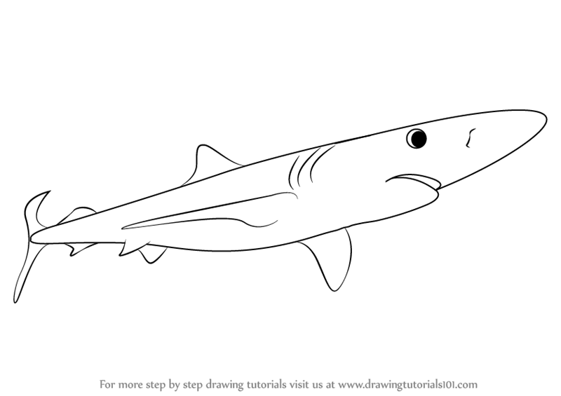 graphic free stock Drawing sharks blue shark. Learn how to draw