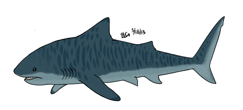 vector transparent download Tiger by brittoniawhite on. Drawing sharks blue shark