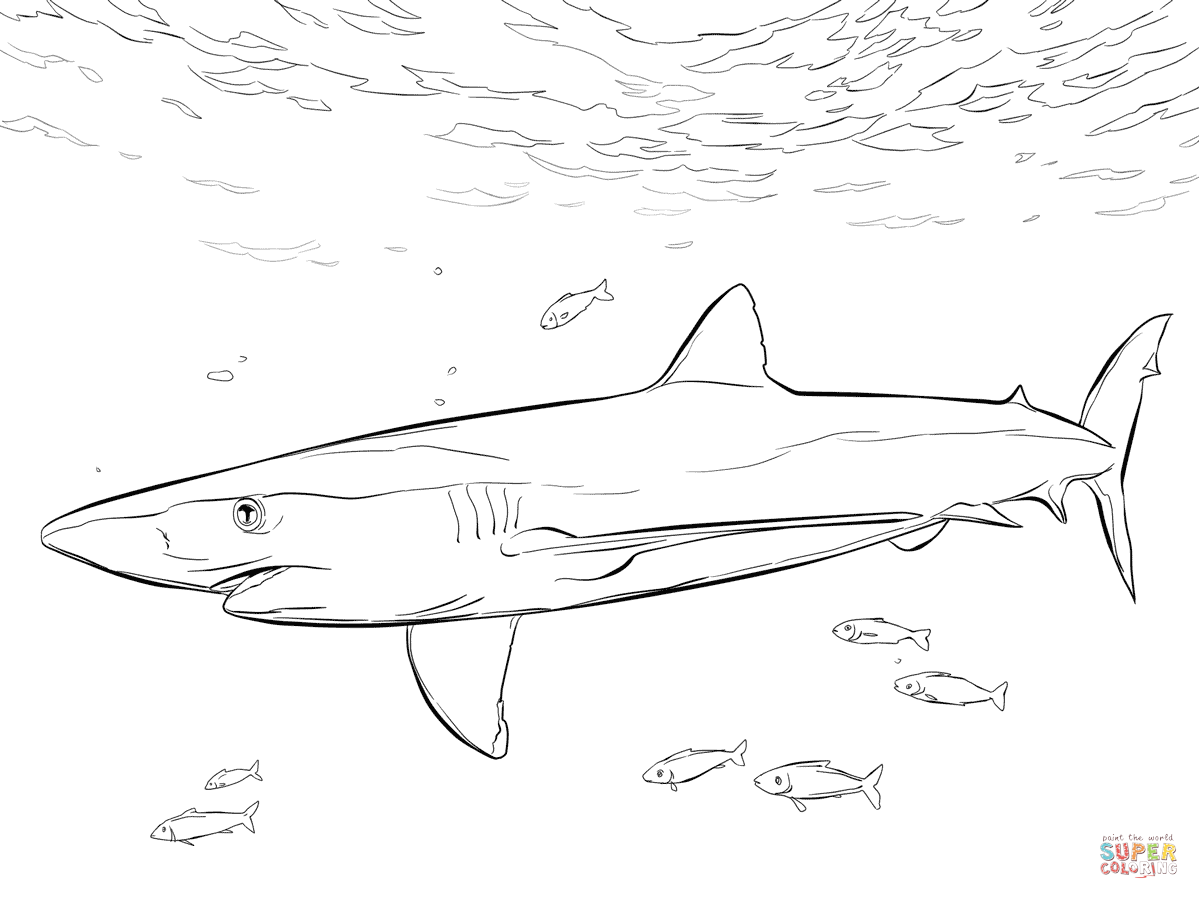 clip freeuse stock With pilot fishes coloring. Drawing sharks blue shark