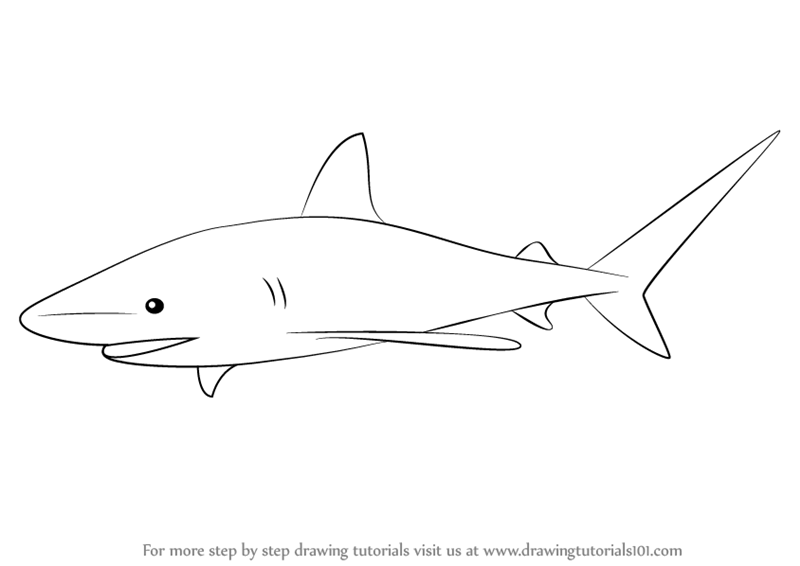 banner transparent download Drawing sharks bull shark. Learn how to draw