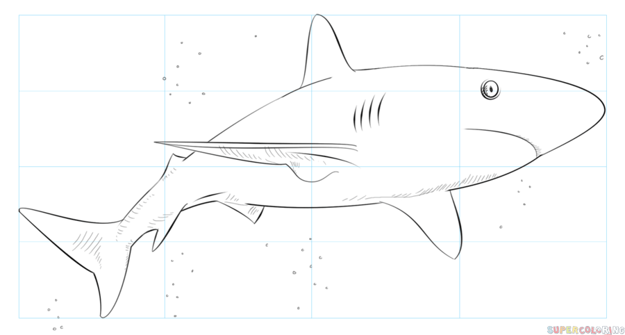image royalty free library How to draw a. Drawing sharks caribbean reef shark