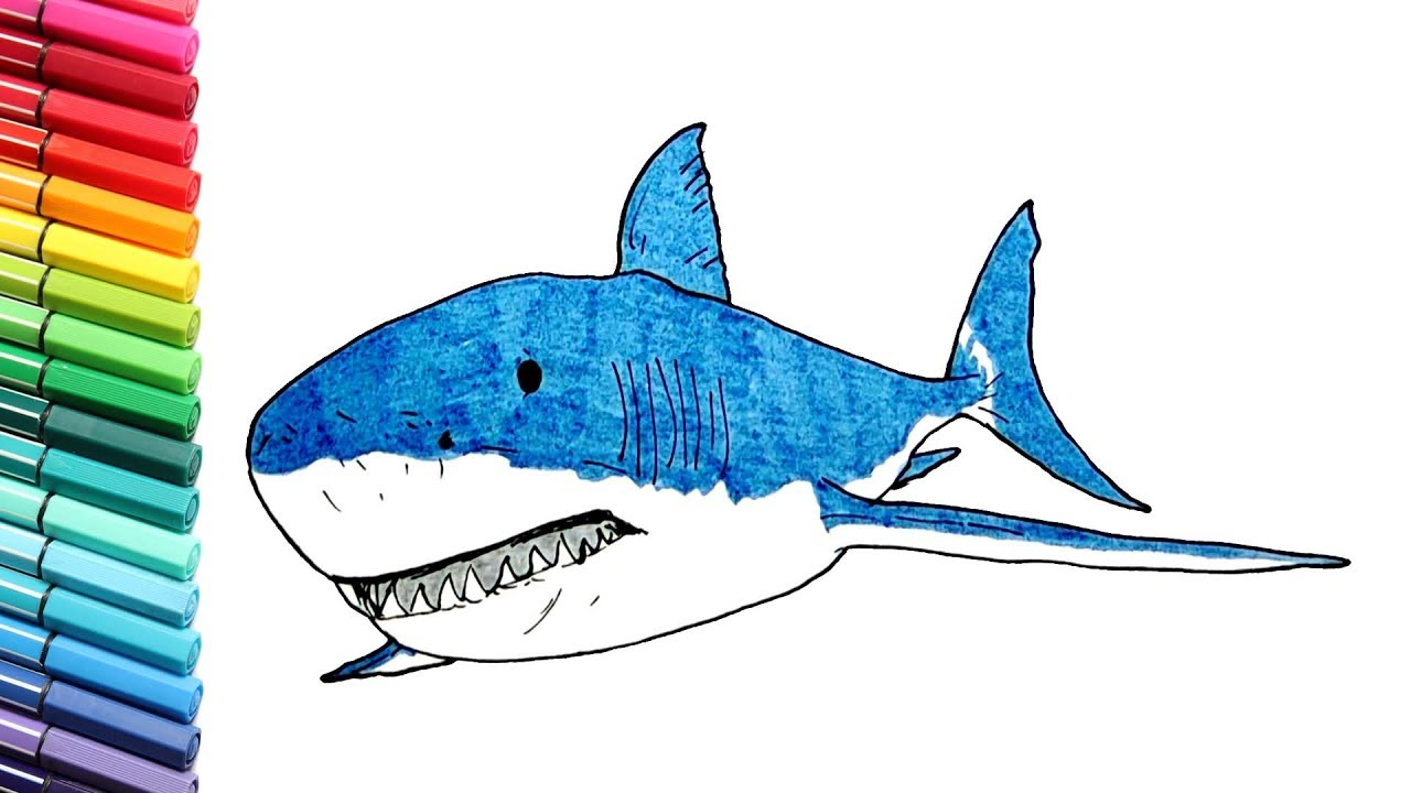 vector stock Drawing sharks color. And coloring shark learning