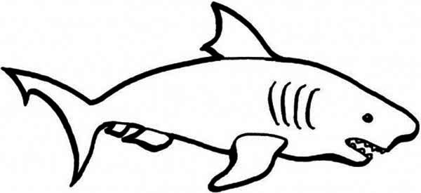 picture transparent stock Drawing sharks color. A simple of blue