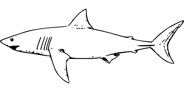 svg black and white library Drawing sharks easy. Free image on pixabay