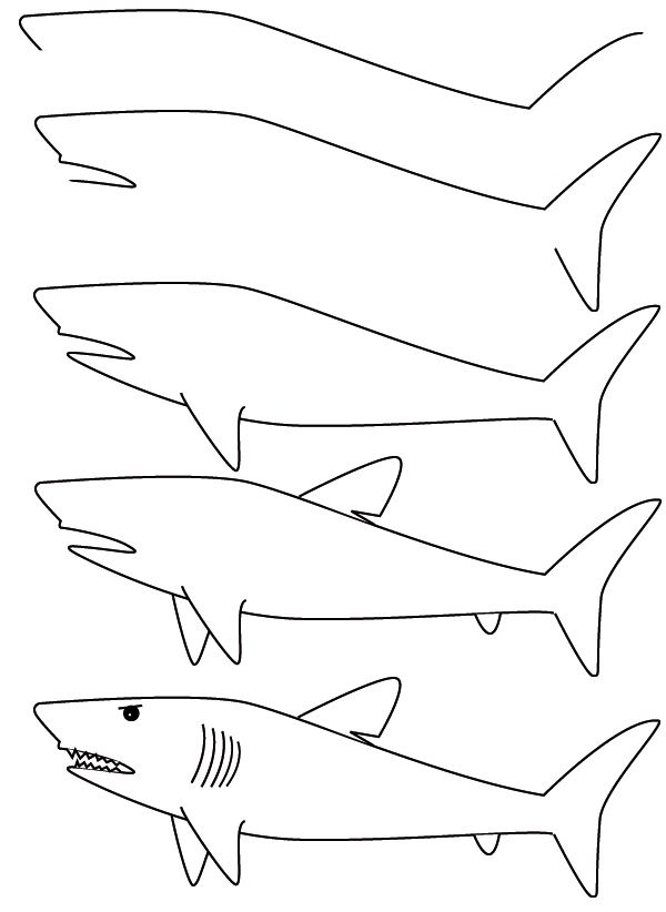 banner black and white stock Drawing sharks easy. A shark finally directions