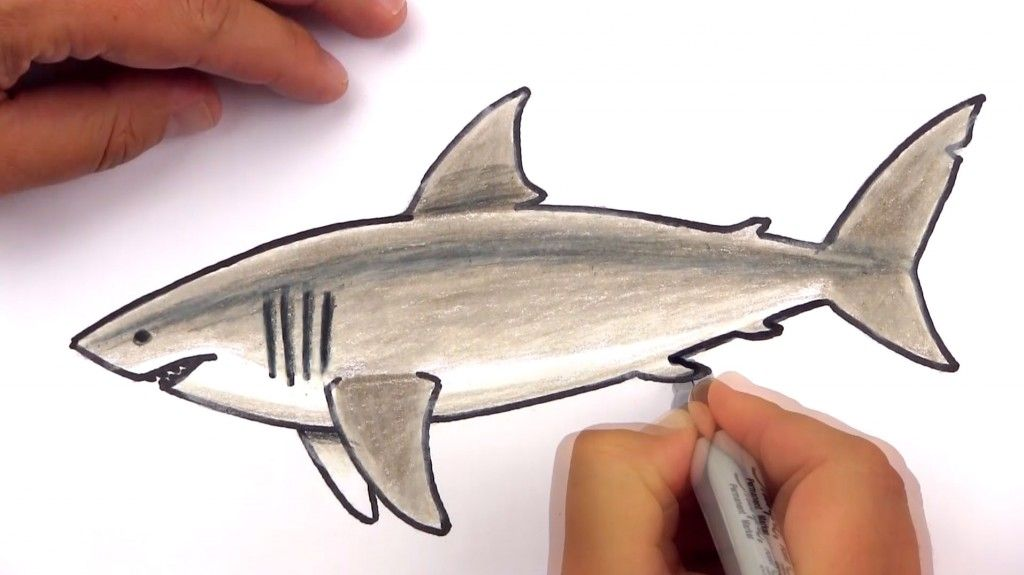 svg free stock How to draw a. Drawing sharks great white shark