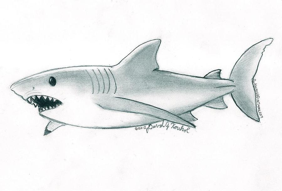 svg stock Drawing sharks great white shark. By david koukol