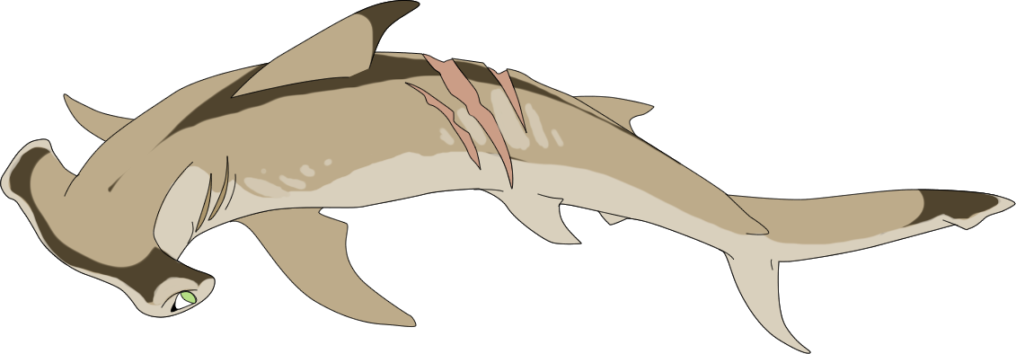 png library download Custom by mbpanther on. Drawing sharks hammerhead shark