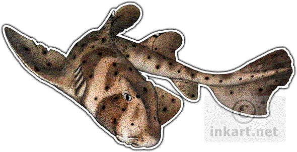 clip black and white download Wildlife art and rays. Drawing sharks horn shark