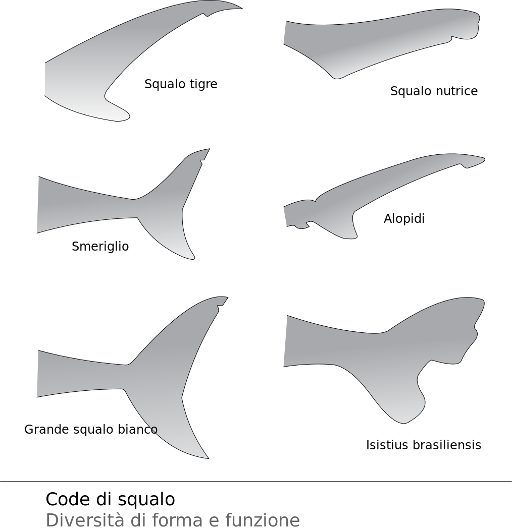 image black and white library Collection of free bull. Drawing sharks horn shark