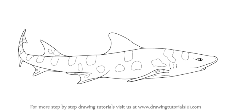 picture black and white Drawing sharks leopard shark. Learn how to draw