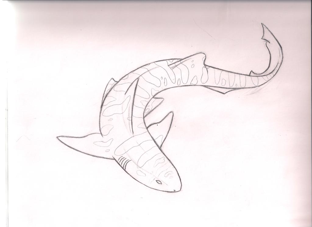 clip art royalty free library Pin by megan beach. Drawing sharks leopard shark