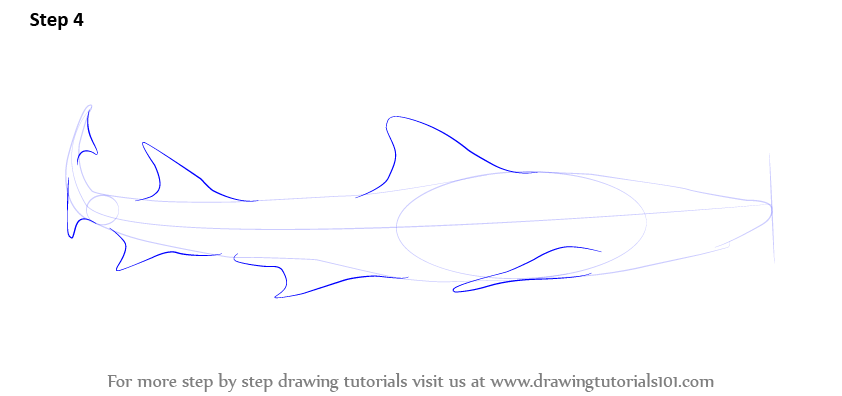 picture black and white Learn how to draw. Drawing sharks leopard shark