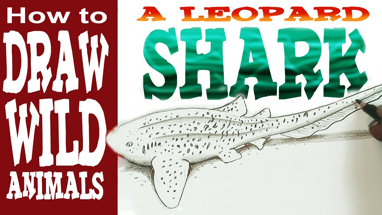 picture royalty free library Drawing sharks leopard shark. How to draw a