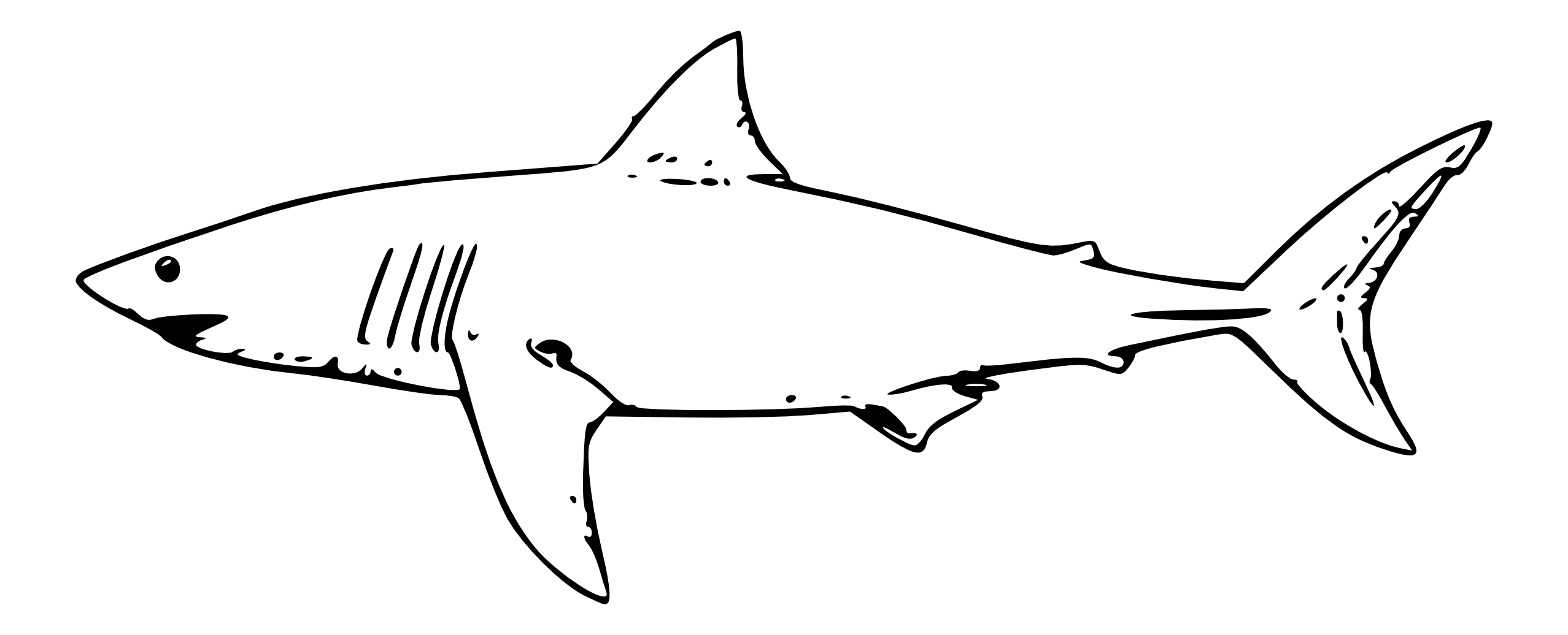 graphic library library Mako shark in park