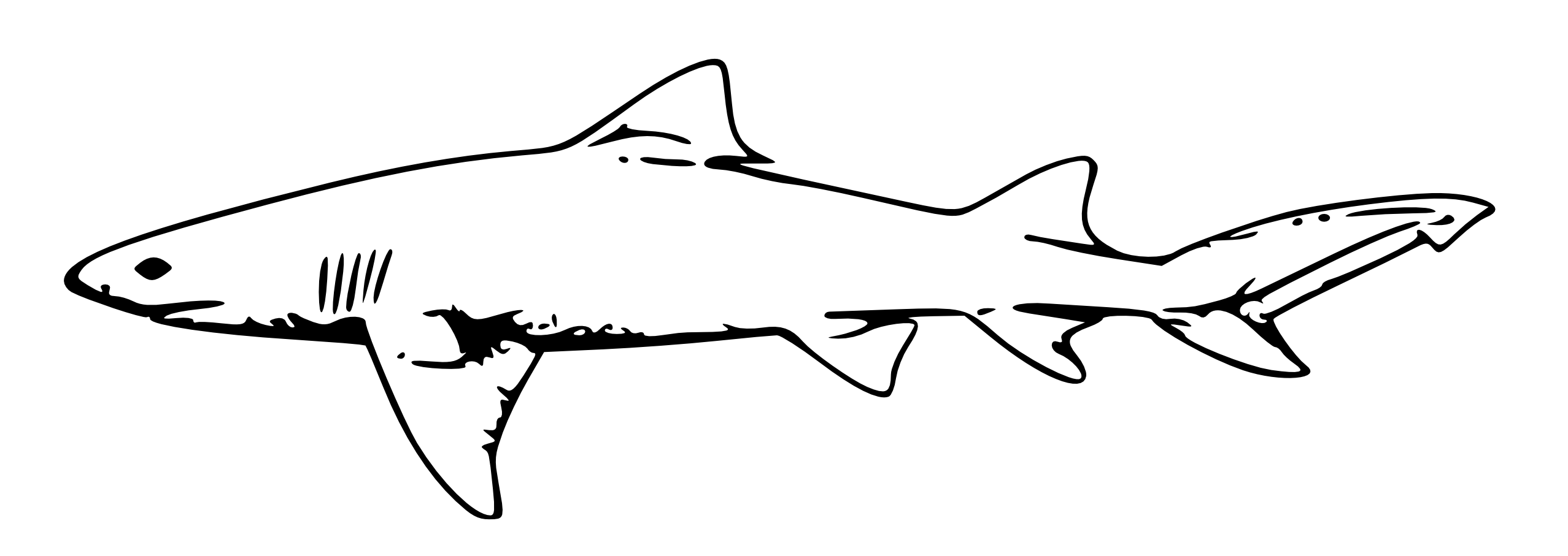 vector free stock Collection of free fancy. Drawing sharks outline