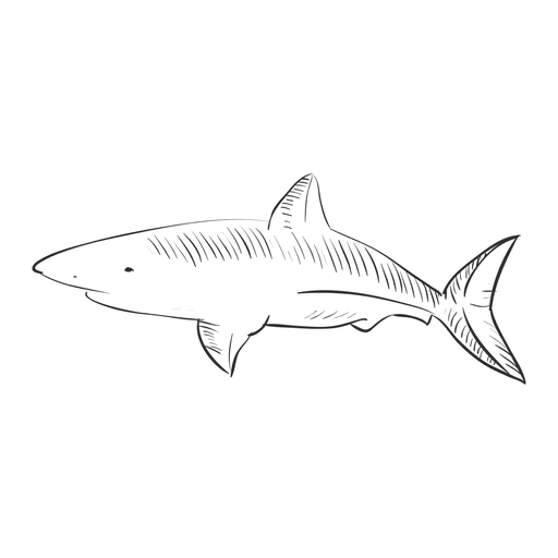 clip art library Hand drawn transparent png. Drawing sharks tiger shark