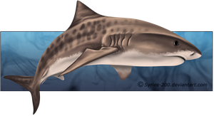 png library download By nioell tattoo ideas. Drawing sharks tiger shark