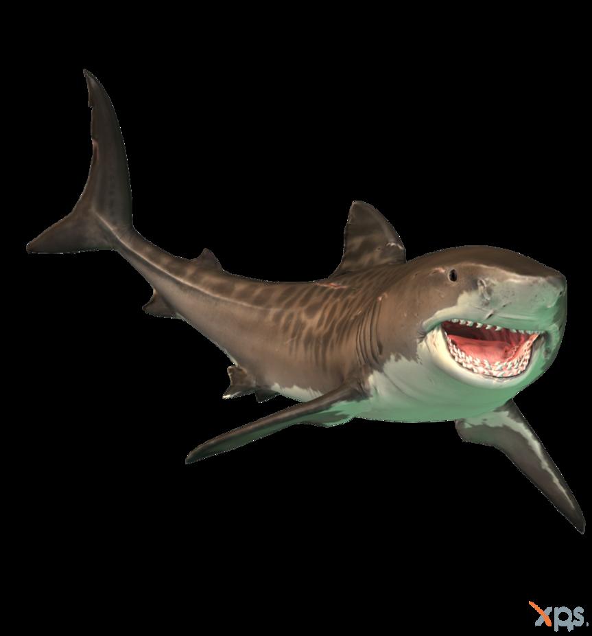 image freeuse download Drawing sharks tiger shark. The depth by mrunclebingo