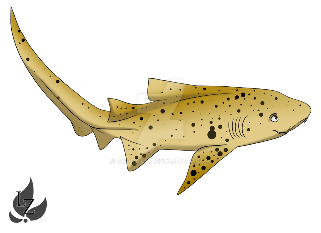 banner free library By zavraan on deviantart. Drawing sharks zebra shark