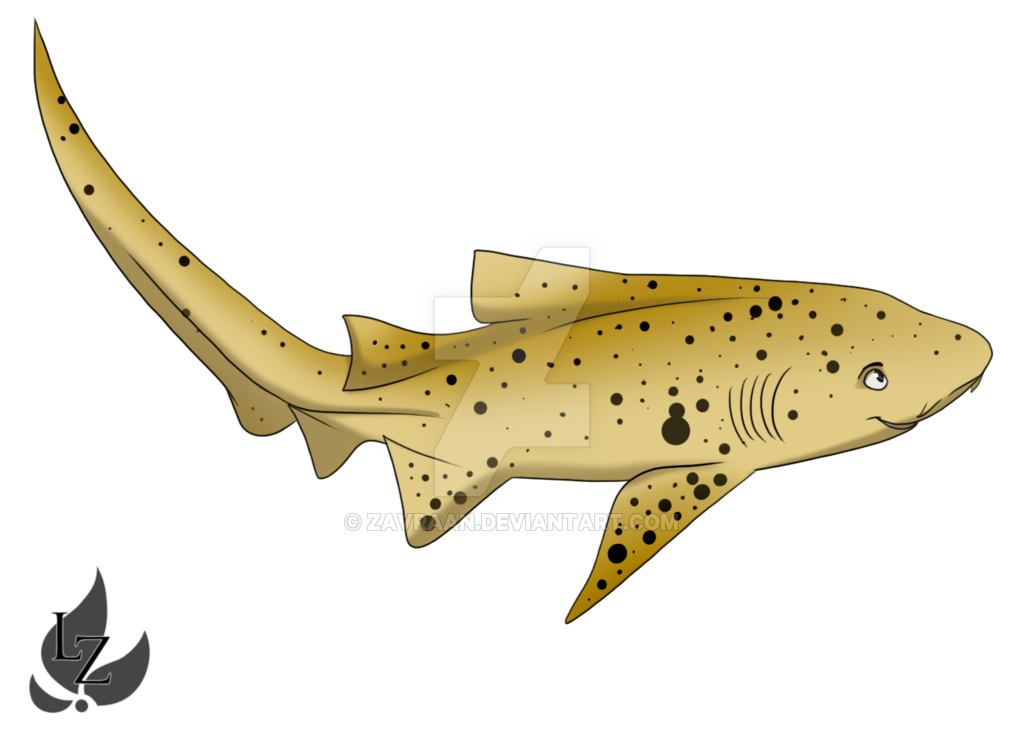free library Drawing sharks zebra shark. By zavraan on deviantart