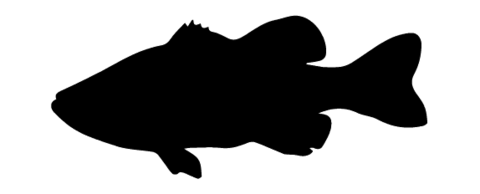 image freeuse download At getdrawings com free. Drawing silhouette smallmouth bass