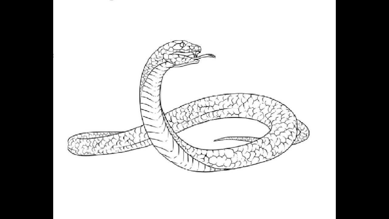 graphic freeuse download Drawing snake black mamba. How to draw full