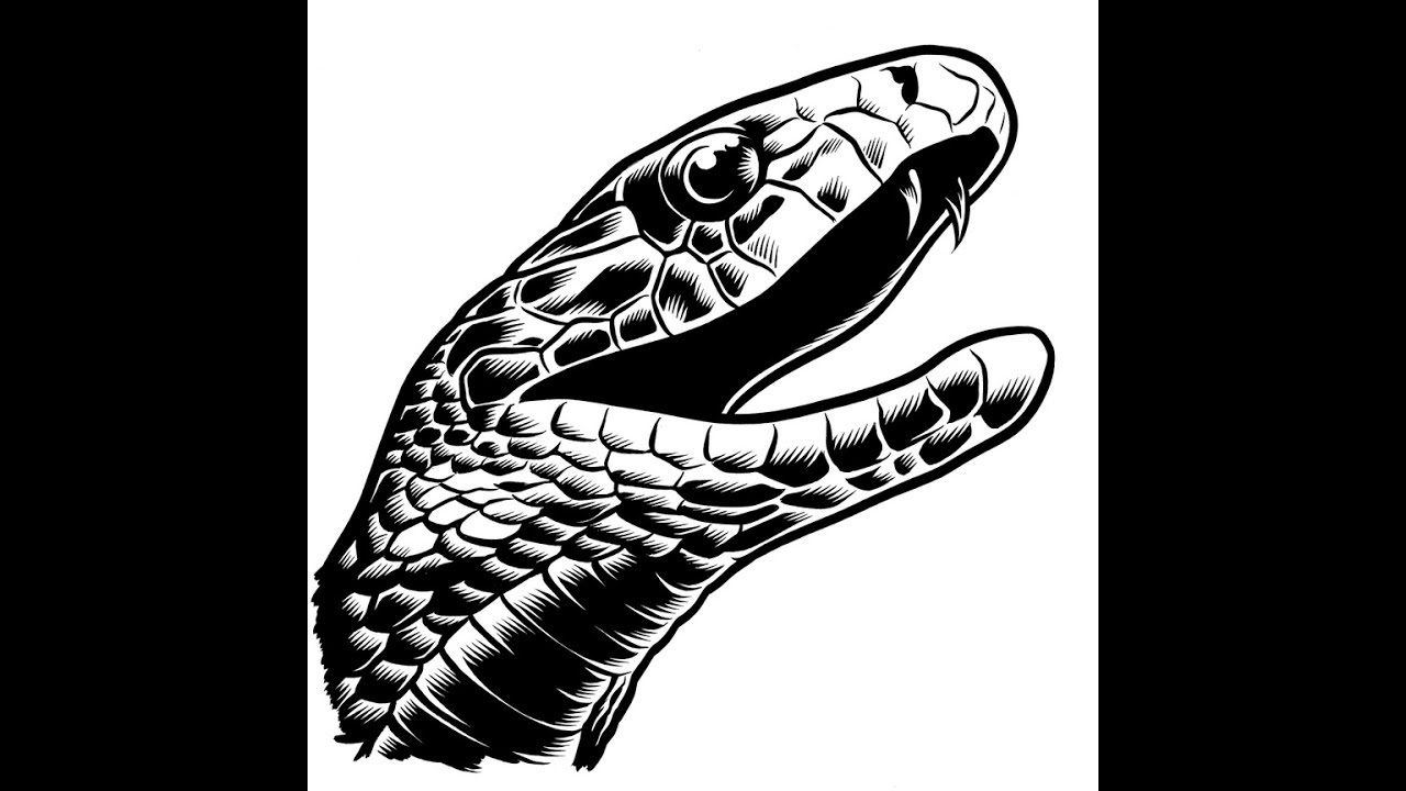 graphic download How to draw head. Drawing snake black mamba