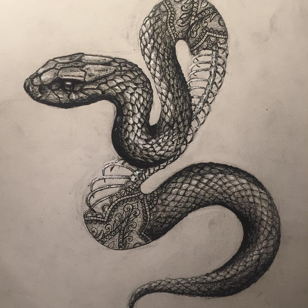 banner transparent download Drawing snake black mamba. Playing with contrasting delicate
