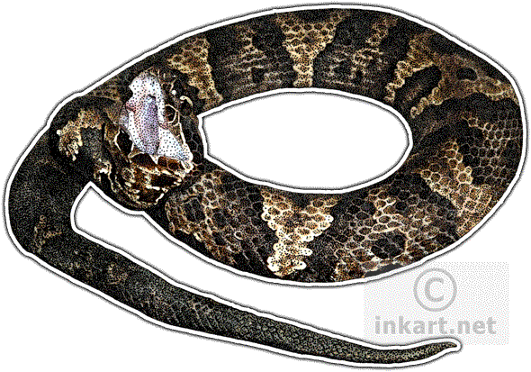 clip free Eastern Cottonmouth or Water Mocassin