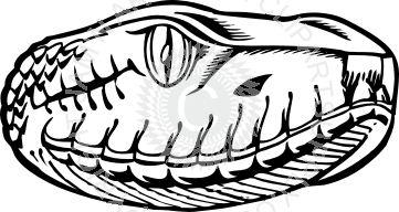 jpg freeuse library Drawing snake head. Looking right