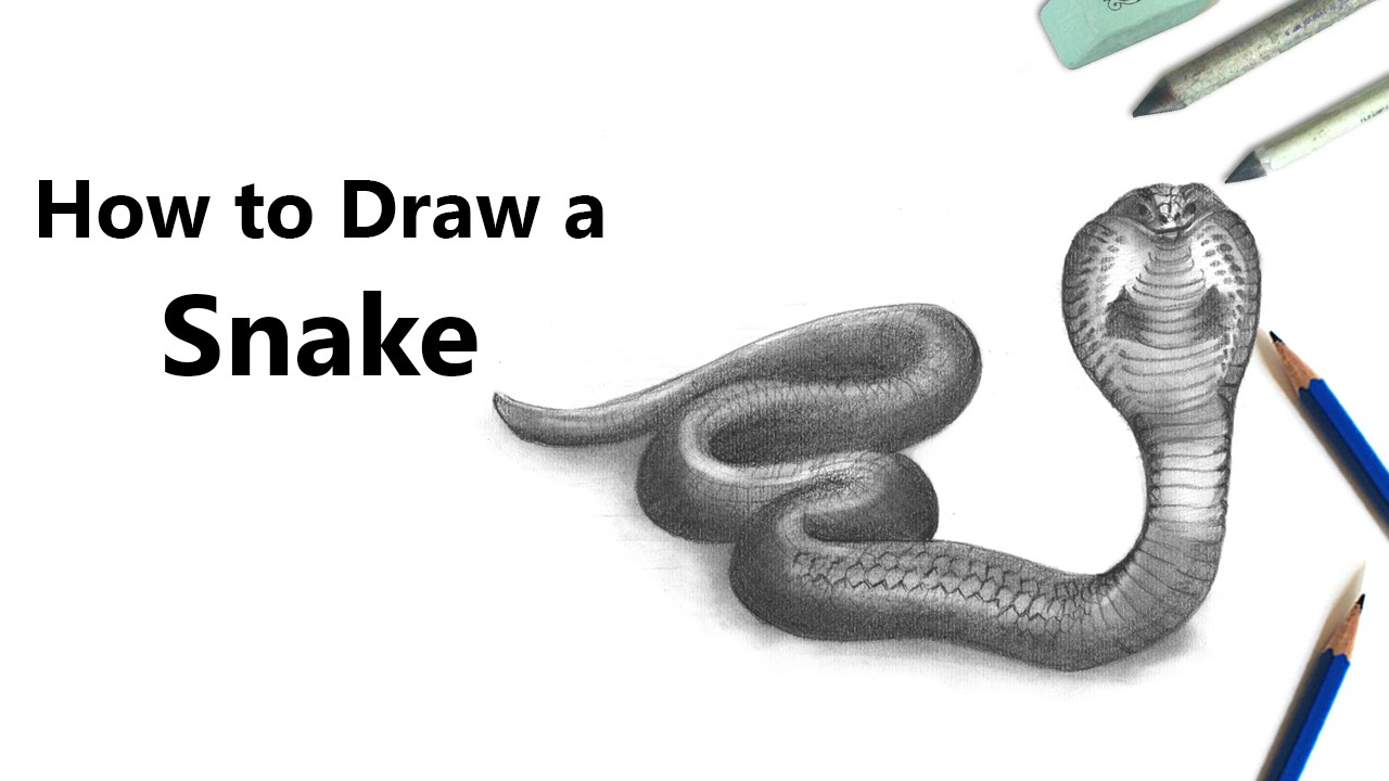 graphic transparent download How to draw a. Drawing snake pencil