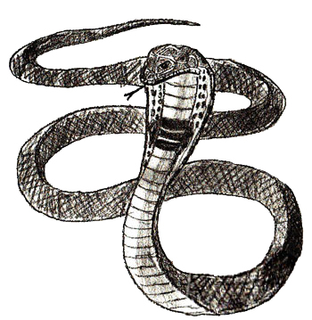 png How to draw a. Drawing snake poisonous
