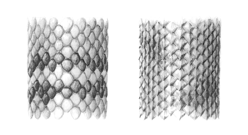 clip library Drawing snake skin. How to draw scales