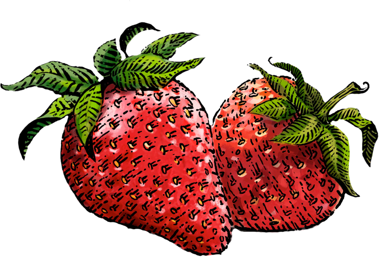 clipart royalty free library Drawing strawberries.  collection of strawberry