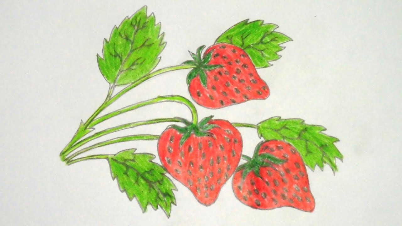 vector stock How to draw pencil. Drawing strawberries colour