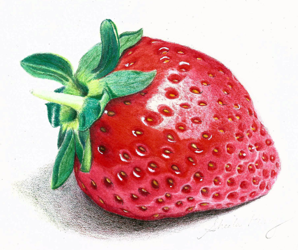 freeuse library Drawing strawberries colour. Coloured pencil lessons from