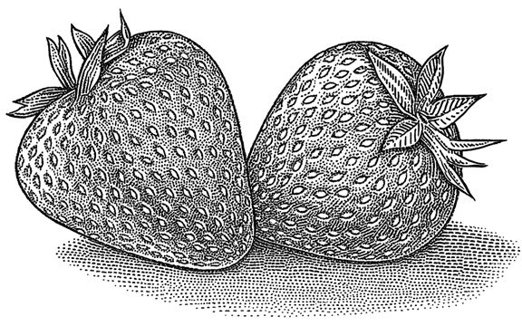 clip art library stock Food illustration for rodale. Drawing strawberries ink