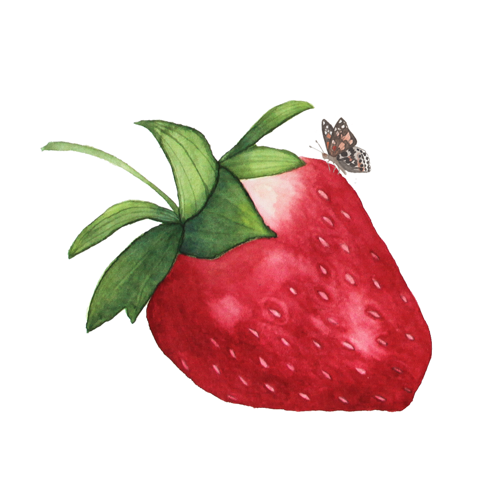 jpg black and white download Drawing strawberries watercolor. The story behind name