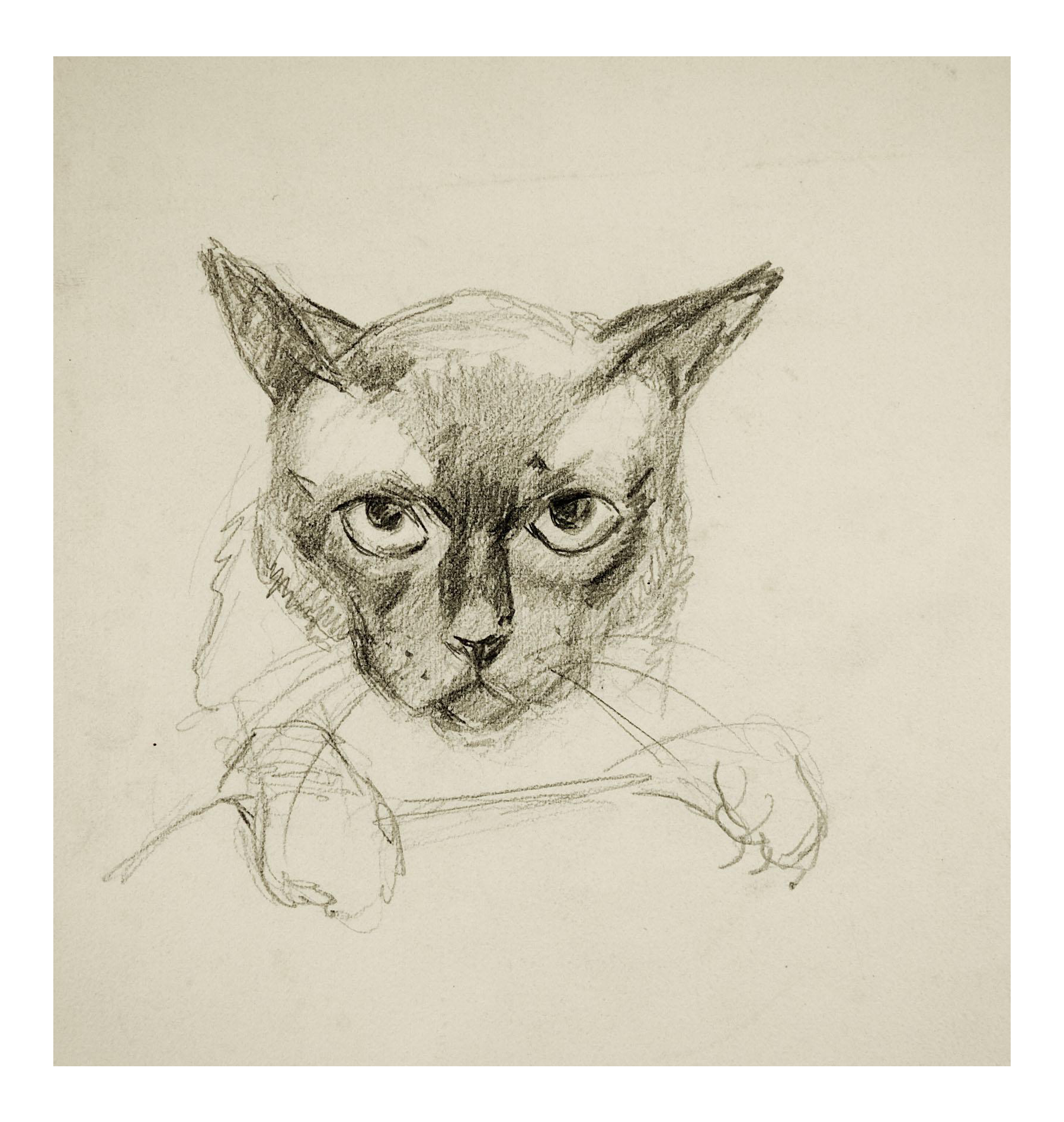 png free George baer pencil study. Drawing charcoal cat