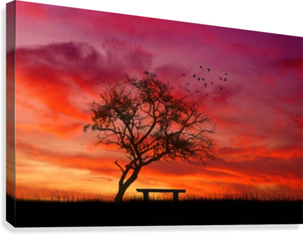 banner free stock lonely sunset