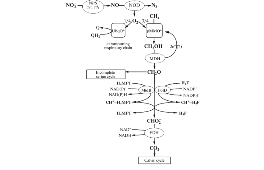 jpg royalty free download Drawing terms abbreviations. Catabolism and energy metabolism